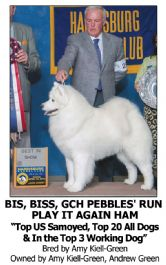 Best Dog Shampoo for White Texture Samoyed Crufts Winner Champion